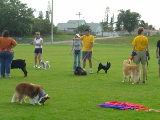 Basic obedience at our Fort Lauderdale class