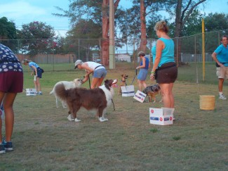 Dog training at Sunview park