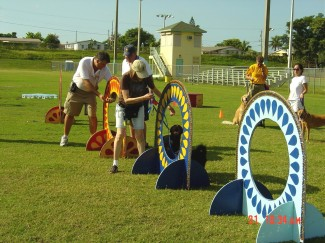 American Idogs dog training in Plantation Fl